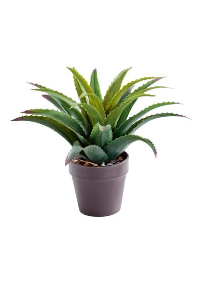 Vaso Aloe artificiale