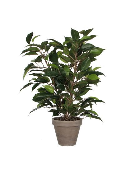 Ficus artificiale in vaso