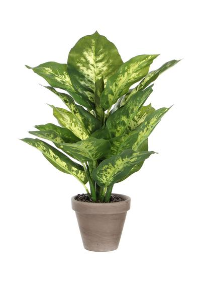 Dieffenbachia artificiale in vaso